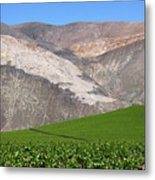 Vineyards In The Atacama Desert Chile Metal Print