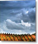 Vineyard 01 Metal Print
