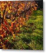Vineyard 13 Metal Print