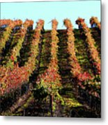 Vineyard 27 Metal Print