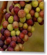 Vineyard Grapes Metal Print