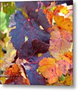 Vineyard In Autumn Metal Print