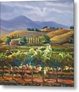 Vineyard In California Metal Print