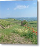 Vineyard In Italy Metal Print