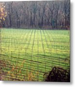 Vineyard In Napa Metal Print