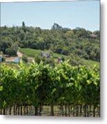 Vineyard In Sebastopol, Sonoma, California Metal Print