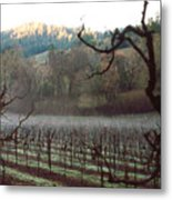 Vineyard In The Winter Metal Print