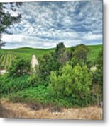 Vineyard On Cloudy Day Metal Print
