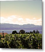 Vineyard On Lake Geneva Metal Print