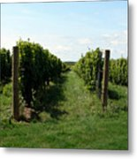 Vineyard On The Peninsula Metal Print