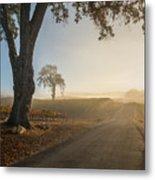 Vineyard Road Metal Print