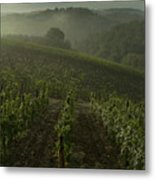 Vineyards Along The Chianti Hillside Metal Print by Todd Gipstein