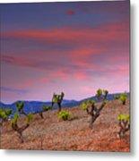Vineyards At Sunset In Spain Metal Print