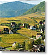 Vineyards In Autumn In The Morning Metal Print