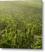 Vineyards Shrouded In Fog Metal Print