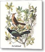 Vintage Boat-tailed Grackles Audubon Metal Print