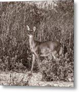 Vintage Deer Metal Print