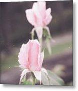 Vintage Double Rose Bud Metal Print