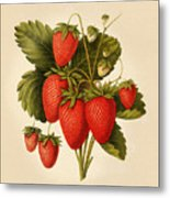 Vintage Strawberries Metal Print