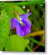 Violet After The Rain  Metal Print
