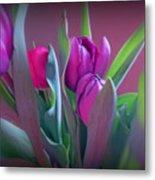 Violet Colored Tulips Metal Print