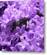 Violet Dream II Metal Print