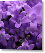 Violet Dream IIi Metal Print