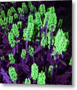 Violet Dream On Green Metal Print