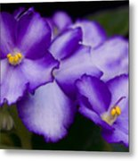 Violet Dreams Metal Print