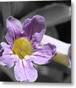 Violet Trumpet Vine Selective Color Metal Print