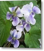 Violets 2 Metal Print by Anna Villarreal Garbis