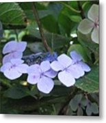 Violets O The Green Metal Print