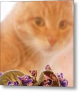 Violets with Cat Metal Print