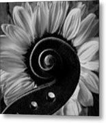 Violin Scroll And Sunflower In Black And White Metal Print