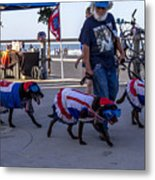 Virginia Beach Dogs  Metal Print