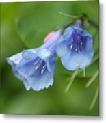 Virginia Bluebells II Metal Print