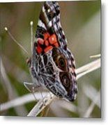 Virginia Lady Butterfly Side View Metal Print