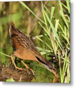 Virginia Rail Metal Print