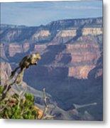 visit to Grand Canyon  Metal Print