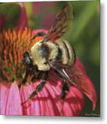 Visitor Up Close Coneflower  Metal Print