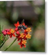 Visor Wearing Bee Pollinates A Colorful Flower Metal Print