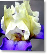 Vivid Iris 6622 H_3 Metal Print