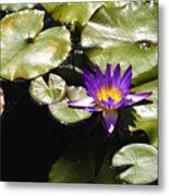 Vivid Purple Water Lilly Metal Print