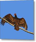 Vivid Vulture .png Metal Print