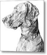 Vizlsa Dog Metal Print