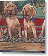 Vizsla Pups Metal Print