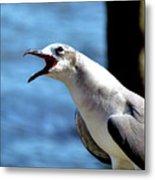 Vocal Sea Gull Metal Print