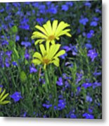 Voltage Yellow And Electric Blue 06 Metal Print