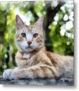 Volterra Italy Cat Watercolor Metal Print