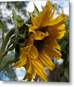 Vt Sunshine Metal Print